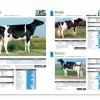 Geno Italy catalogo agosto 2013