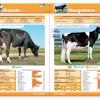 Cosapam catalogo agosto 2013